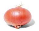 Cebolla Comun